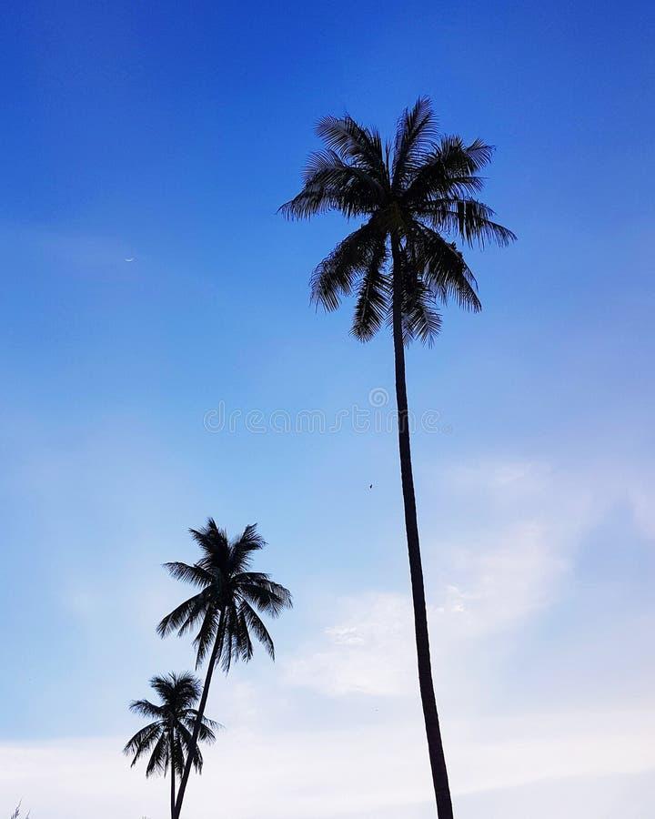 反对日落天空的椰子 免版税图库摄影