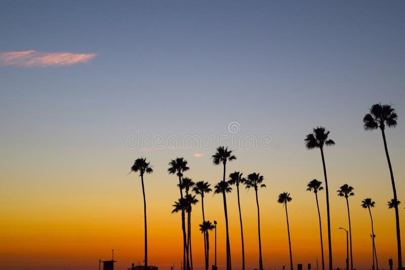 反对日落天空的高棕榈树 库存照片
