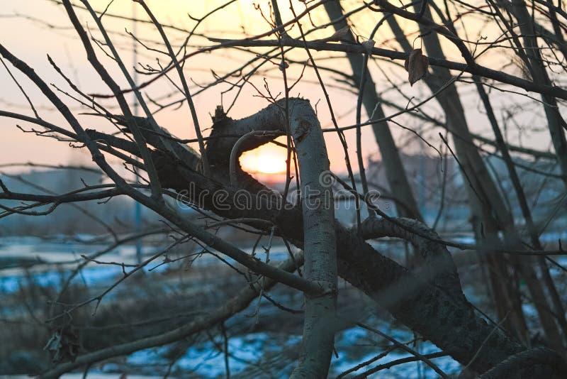 反对日落的赤裸树枝 免版税库存图片