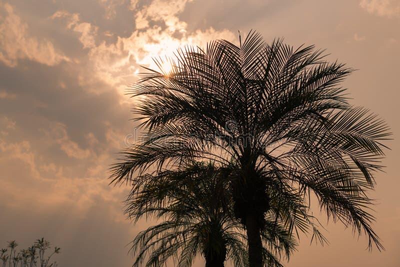 反对日落背景的棕榈树剪影 免版税库存图片