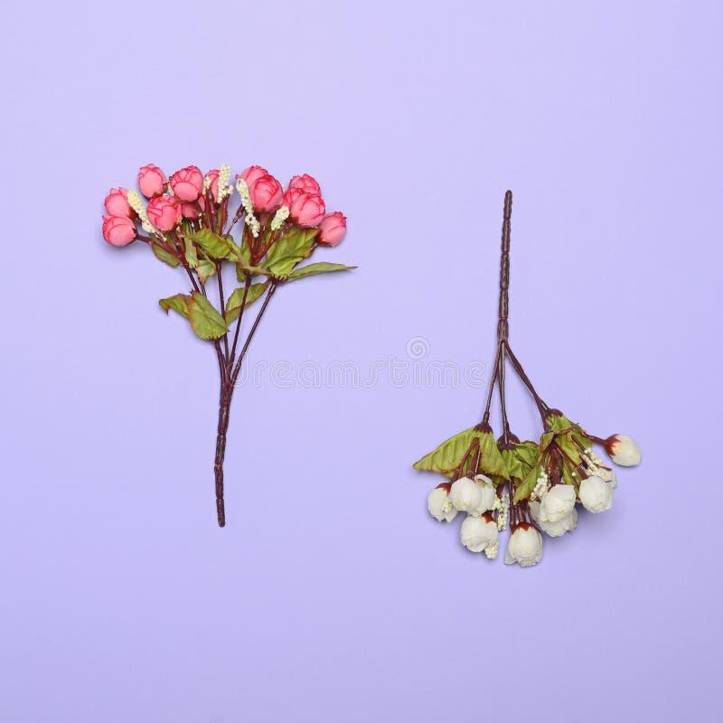 反对明亮的紫色背景-最小的概念的花 库存照片