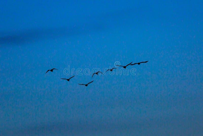反对晚上天空的鸟 免版税库存图片