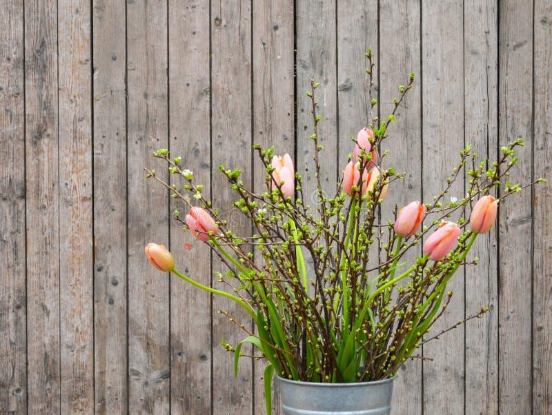 反对木背景的春天郁金香 库存图片