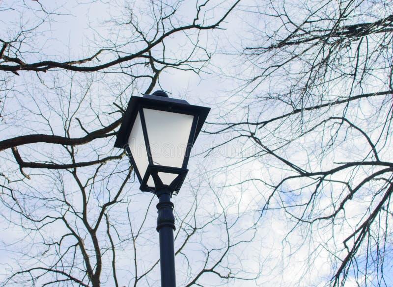 反对树枝背景的街灯  免版税库存图片