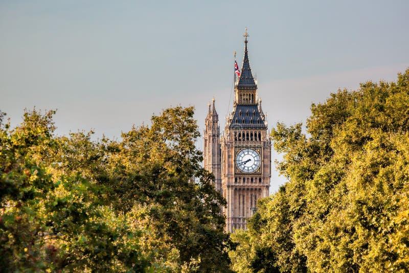反对树的大本钟时钟在伦敦,英国,英国 图库摄影