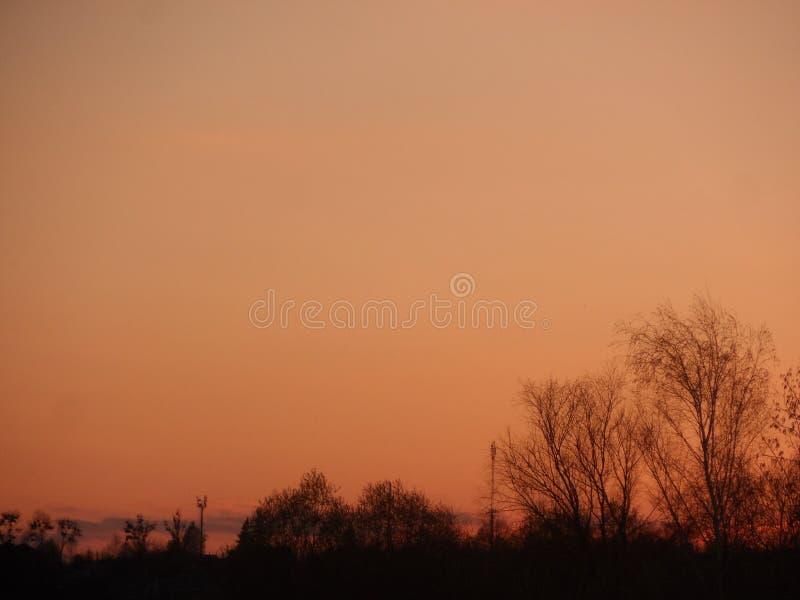 反对橙色天空的树 免版税库存照片