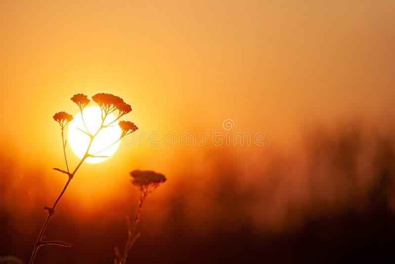 反对橙色落日的草特写镜头 浅景深,被定调子的图象 库存图片