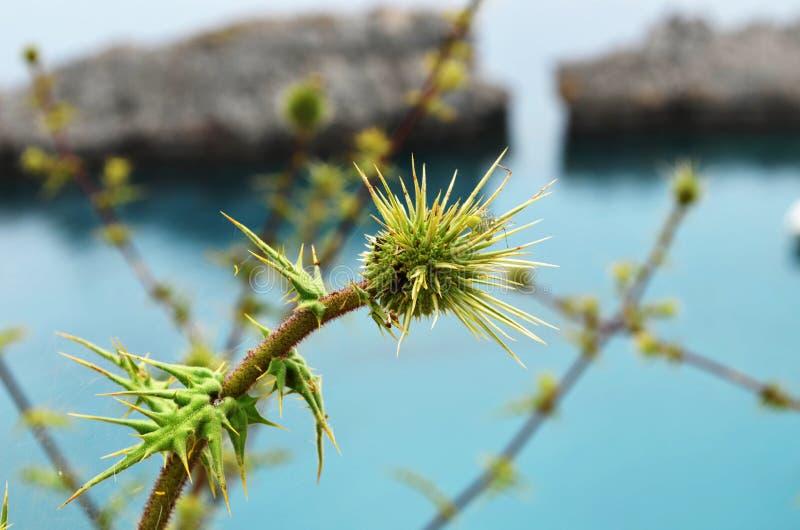 反对海的一朵多刺的花 免版税库存照片
