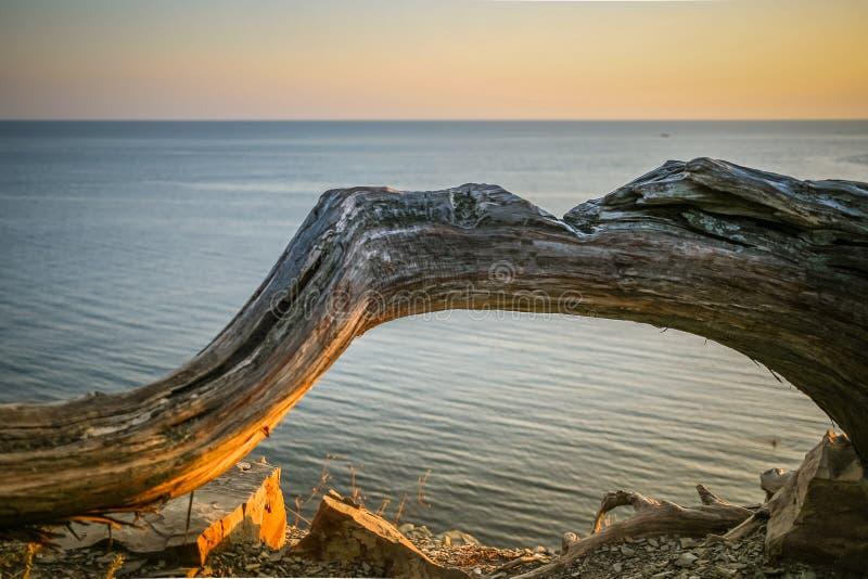 反对海的被日光照射了弯曲的树干日落的在夏天 免版税库存照片