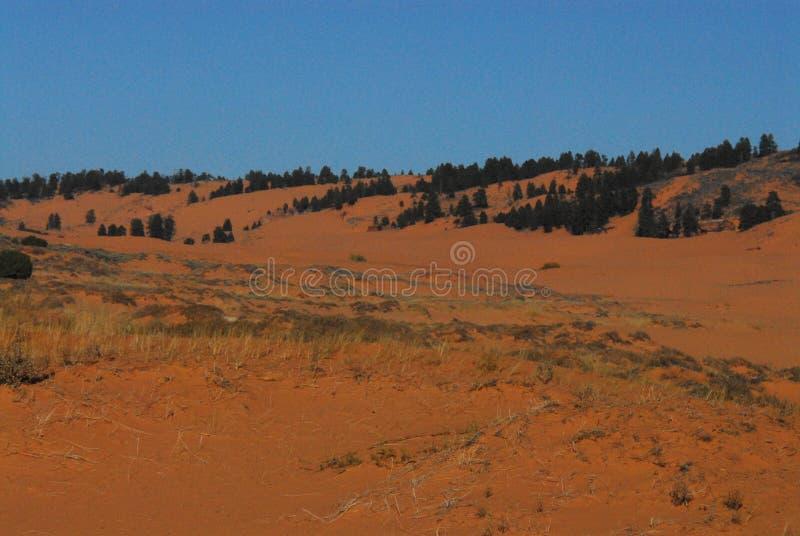 反对深蓝天的亚利桑那红色沙漠风景 免版税库存图片
