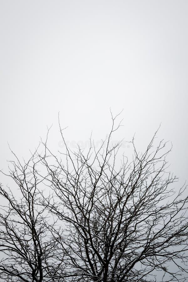 反对清楚的天空的光秃的树 库存照片