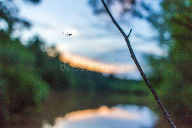 反对湖日落的蜘蛛剪影 免版税库存图片