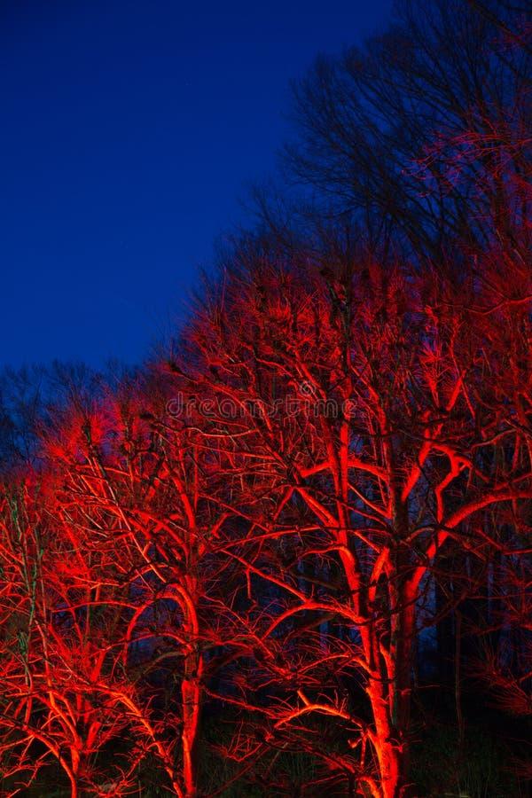 反对生动的蓝天的发光的红色树 库存照片