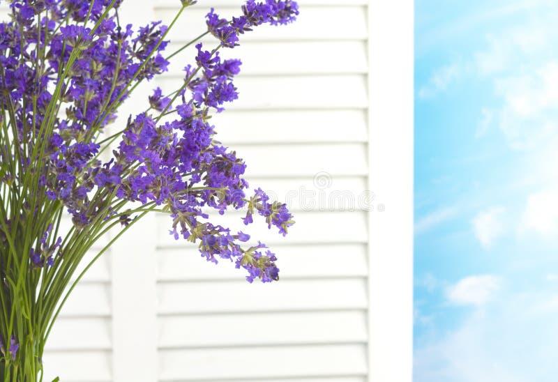 反对白色窗口的淡紫色花束关闭注视着与天空和云彩的一新天在一俏丽的天 图库摄影