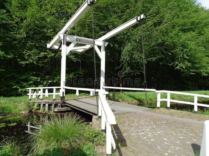 反对绿色叶子的白色吊桥 库存照片