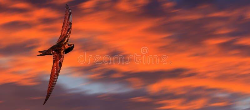 反对美丽的天空的高速鸟飞行 免版税图库摄影
