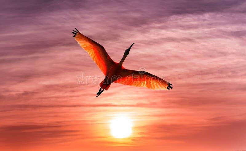 反对美丽的橙色天空全景的热带鸟 图库摄影
