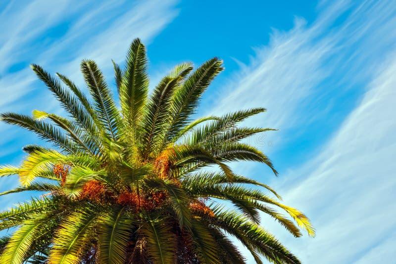 反对美丽的蓝天的棕榈树 免版税库存图片