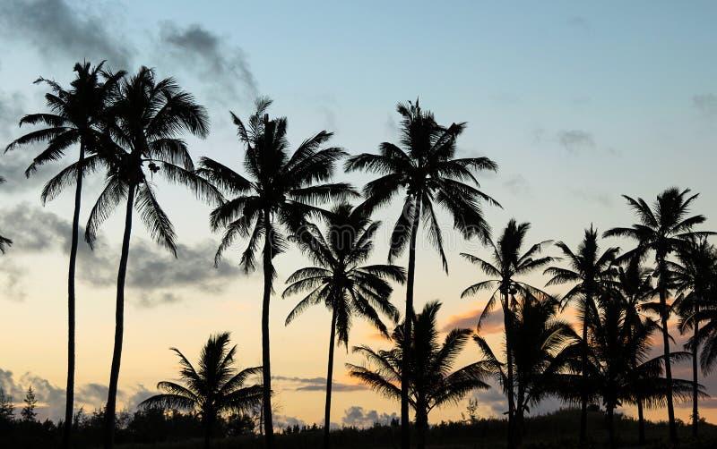 反对背后照明的棕榈树在日落 库存图片