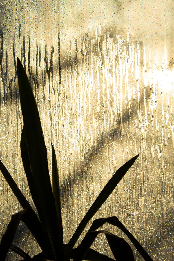反对背后照明的棕榈树从冻窗口 免版税库存图片