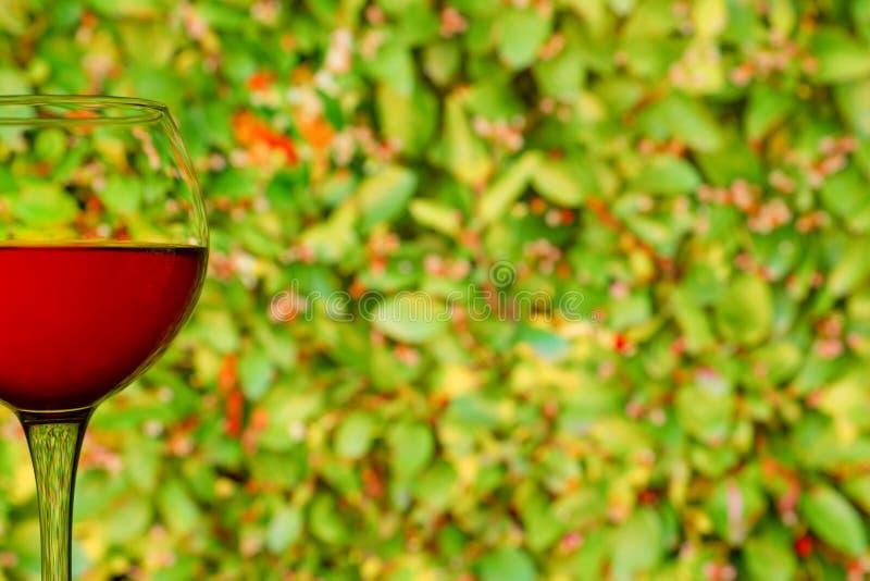 反对花卉绿色背景的红葡萄酒玻璃 库存图片