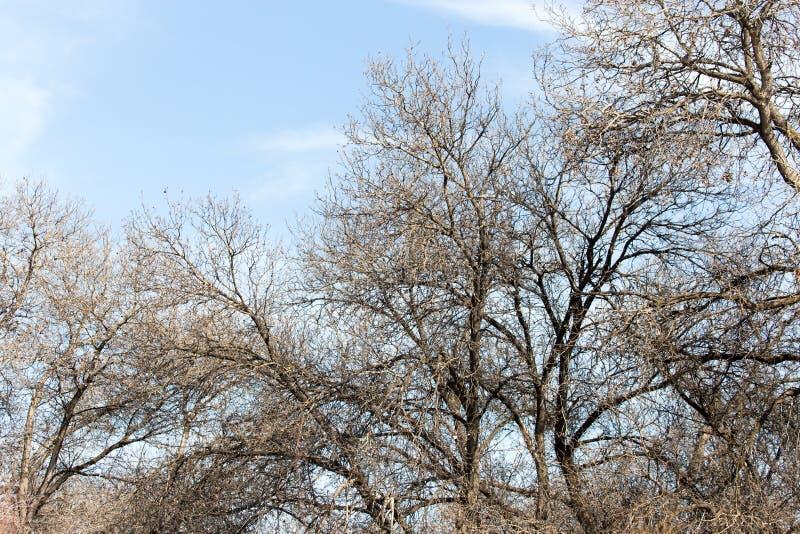反对蓝天的不生叶的树枝 库存照片