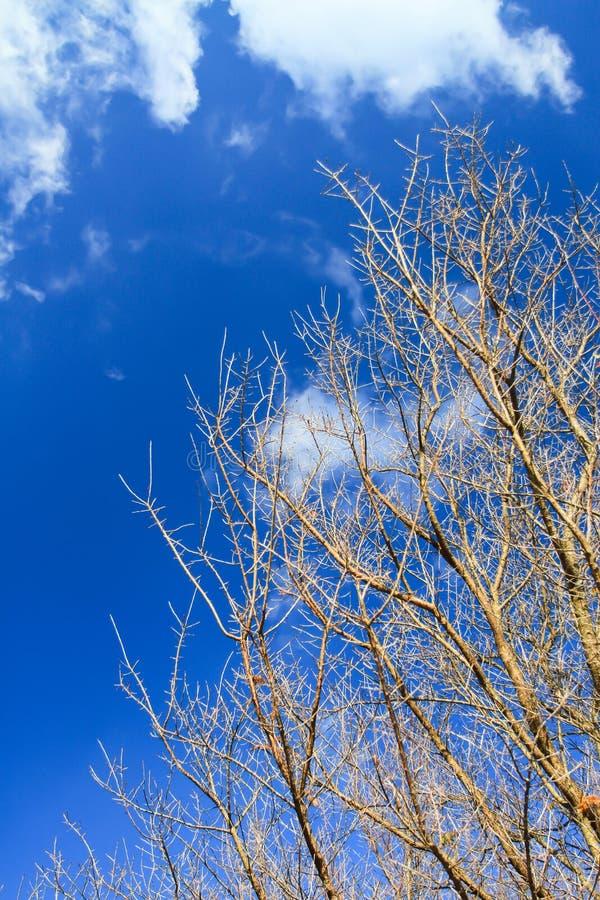 反对蓝天的不生叶的树枝 图库摄影