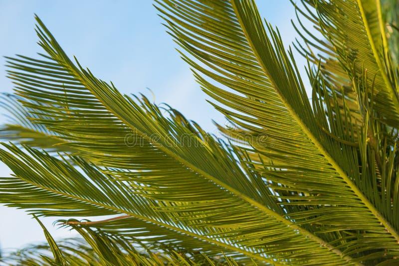 反对蓝天的棕榈叶 假期,自然,热带题材 库存照片