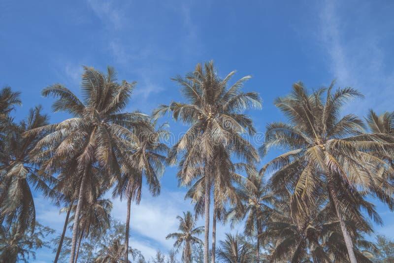 反对蓝天的棕榈树,在热带海岸的棕榈树 图库摄影