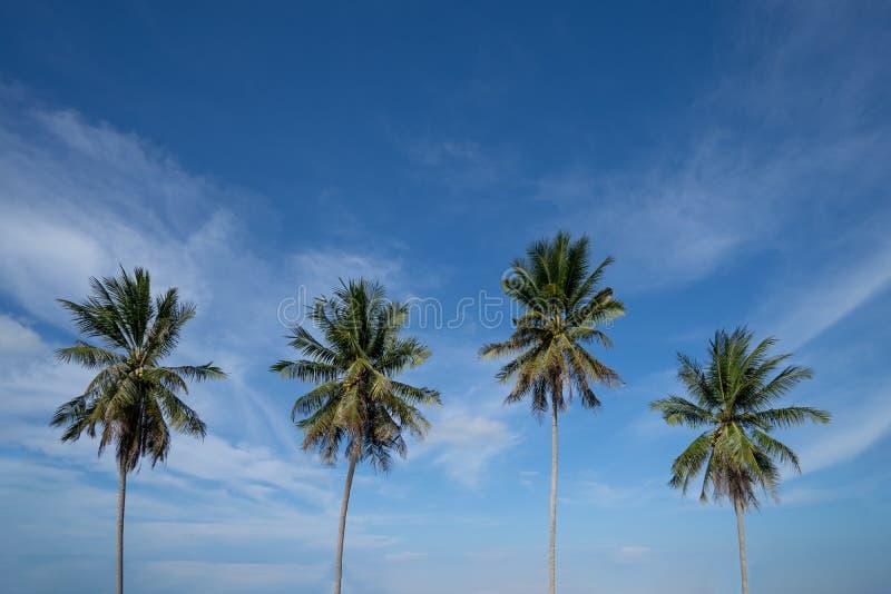 反对蓝天的棕榈树,在热带海岸,被定调子和被传统化的葡萄酒的棕榈树,椰子树,夏天树,减速火箭 免版税库存照片