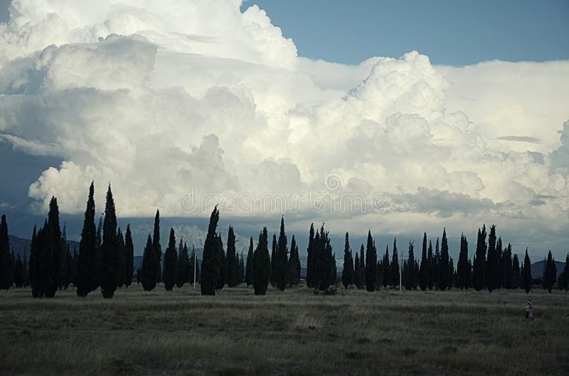 反对蓝天的白色云彩与高柏树剪影在领域的 免版税库存照片