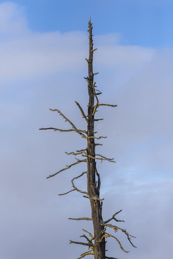 反对蓝天的贫瘠树 库存照片