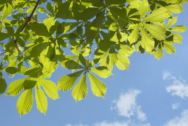 反对蓝天的绿色叶子 库存照片