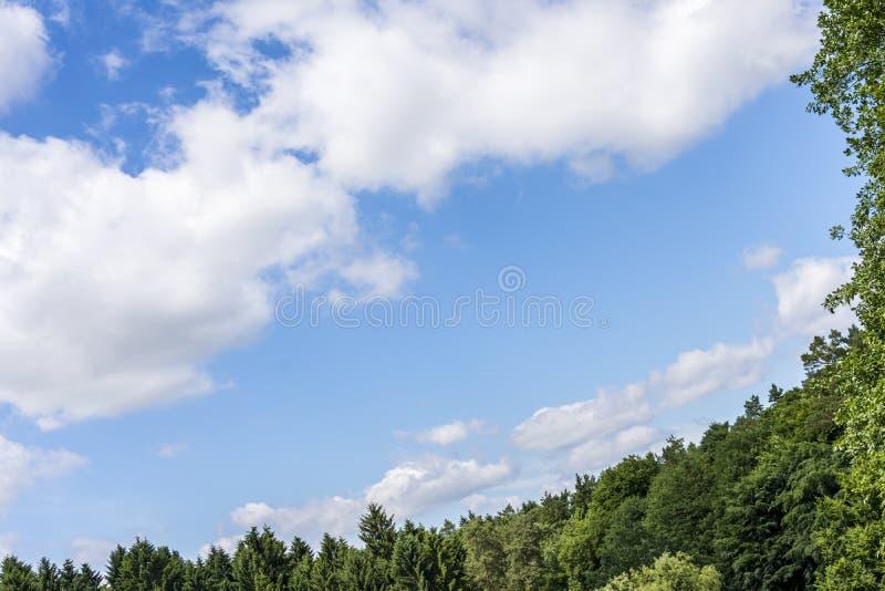 反对蓝色多云天空的杉树剪影 图库摄影