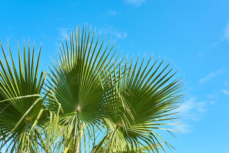 反对蓝色多云天空的棕榈树在白天 免版税库存图片