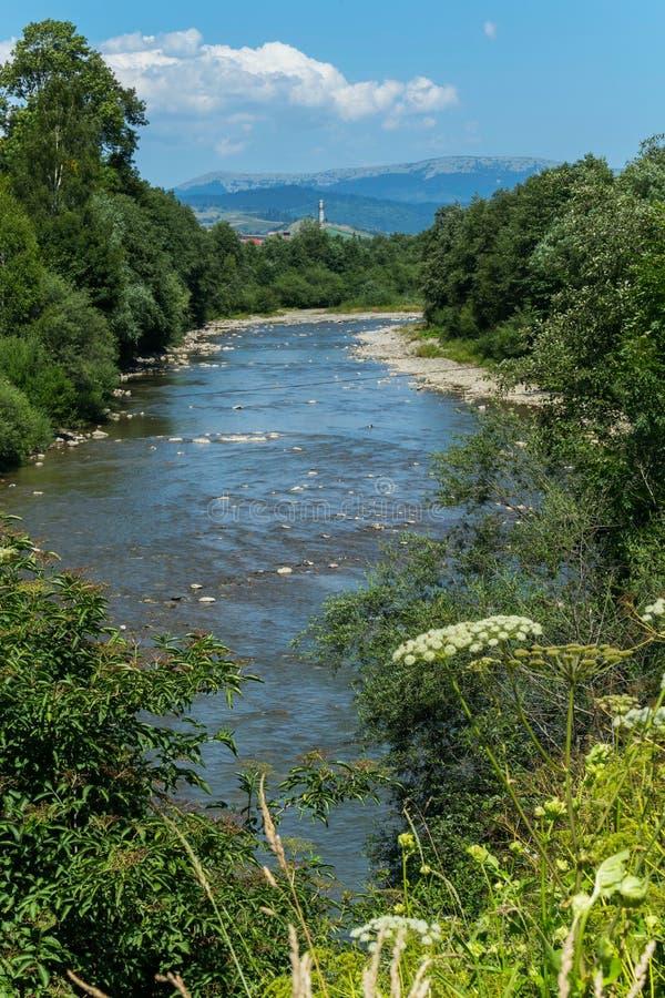 反对蓝色河、绿色树和高山的开花的野花 库存图片