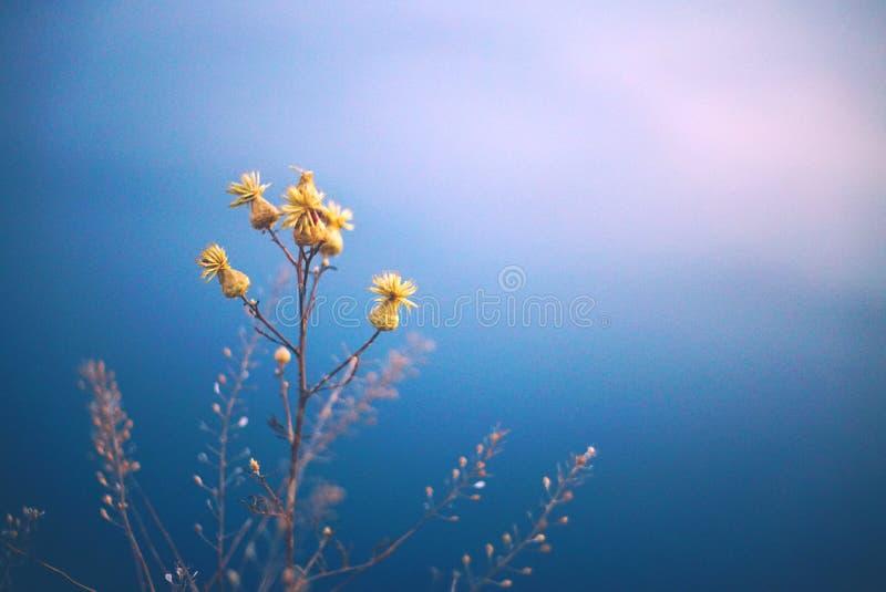 反对蓝色海的黄色花 库存照片