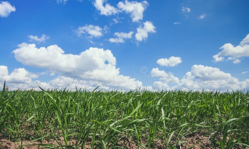 反对蓝色,多云天空的美丽,大绿色领域冬天cerea 库存照片