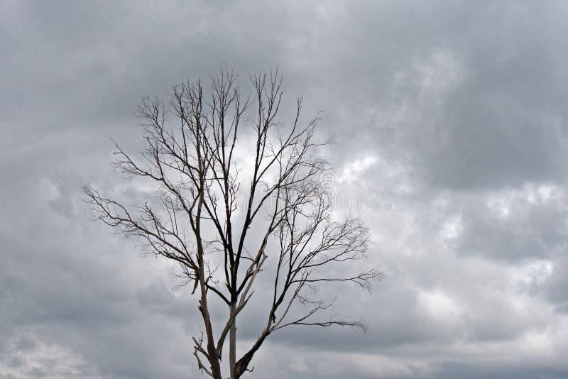 反对阴暗天空的贫瘠树 库存照片