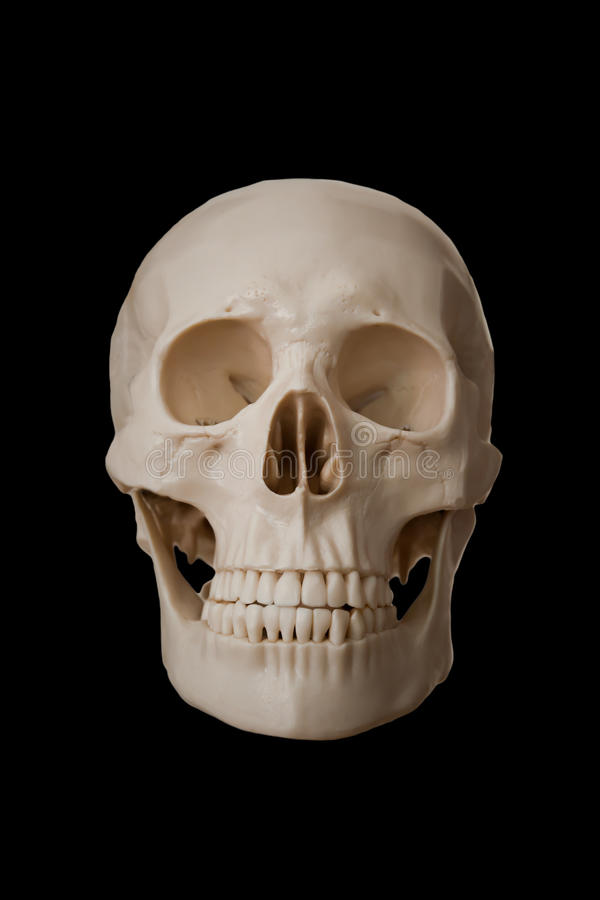 反对隔绝的人的头骨在黑背景 库存图片
