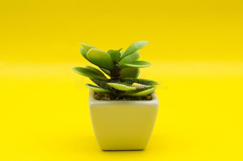 反对黄色背景的一点塑料植物 免版税库存图片