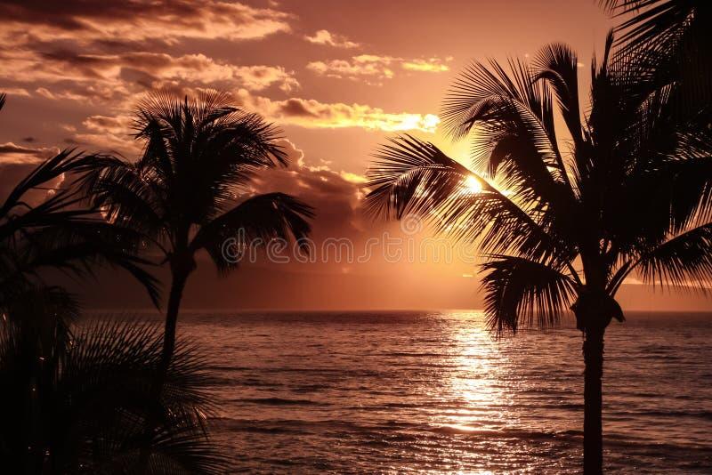 反对黄色日落天空-夏威夷的棕榈树剪影 免版税库存照片