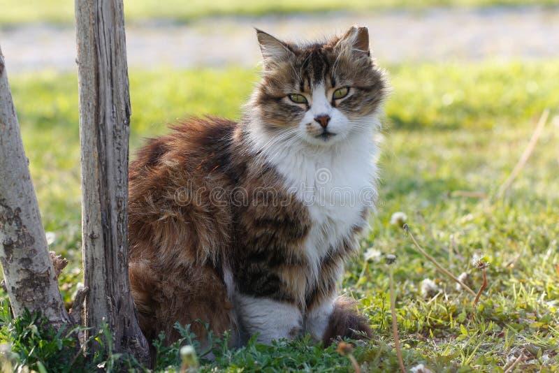 反对绿色背景的猫 免版税库存图片