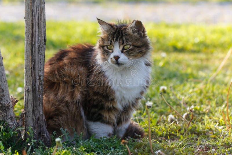 反对绿色背景的猫 库存图片