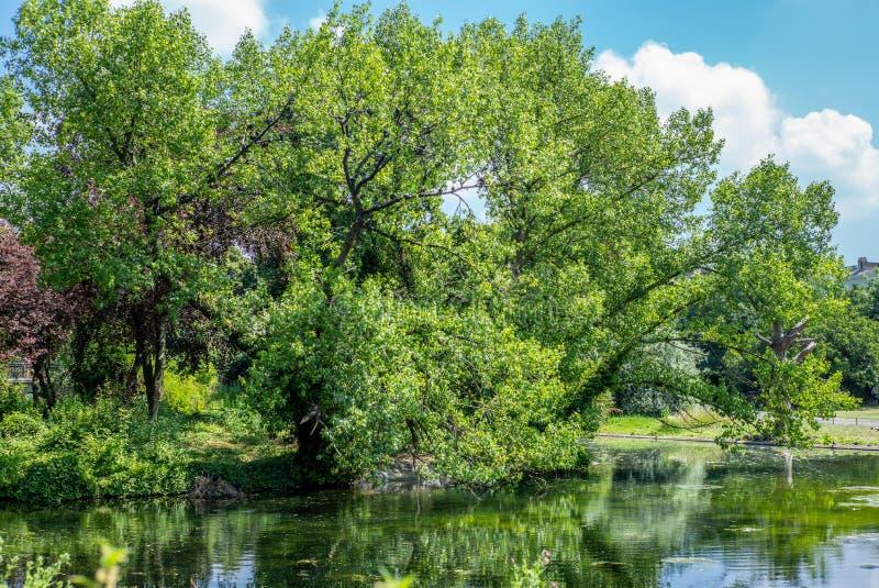 反射在一个公园的树在伦敦在夏天- 1 免版税库存照片