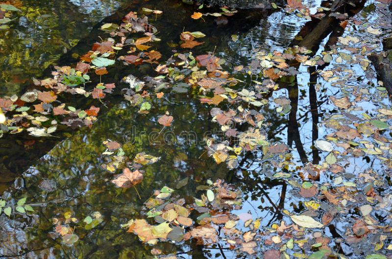 反射在一个镇静池塘的树 免版税库存照片