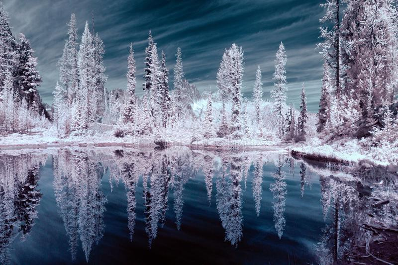 反射在山池塘的红外树 免版税库存照片