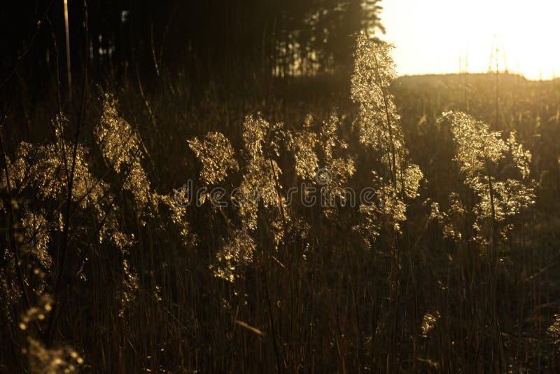 反射在干燥倾向和草的太阳由在日落的海海滩 库存图片