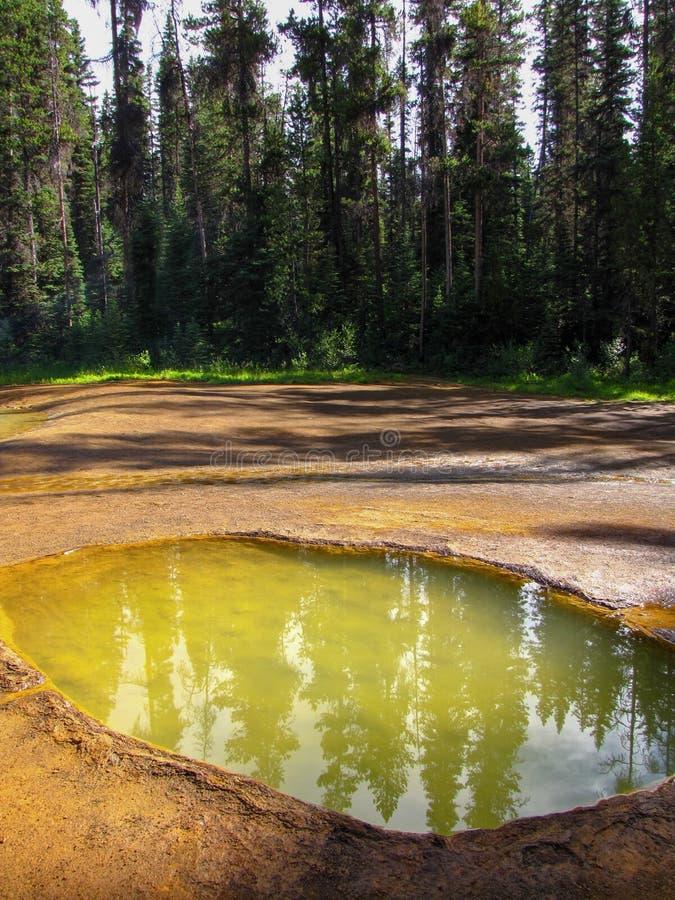 反射在彩瓯水池,库特尼国家公园,加拿大的松树 图库摄影