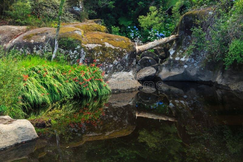 反射在森林地湖 库存图片